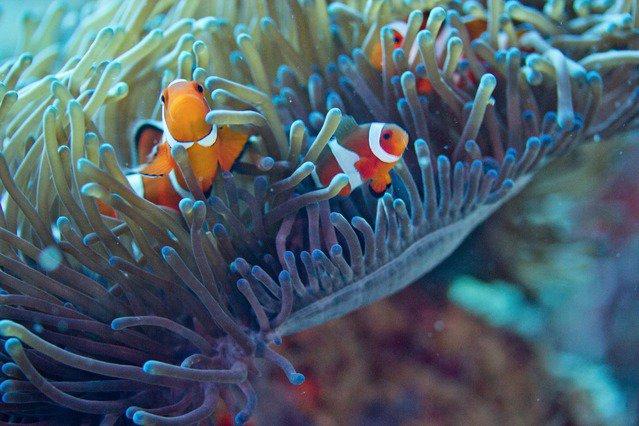 Diving in Danao, Philippines - By Silvio Scaglia