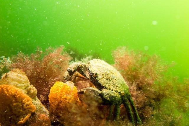 Diving in Netherlands, Scharendijke - By Sander Nijdam