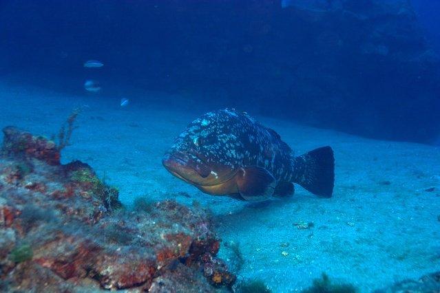 Diving in Spain, Lanzarote - By Ksso