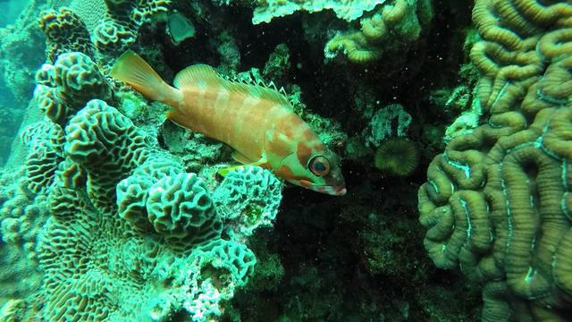 Ban's Diving Center - Dive Center