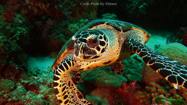 Diving in Phuket, Thailand - By Matthieu Frobert